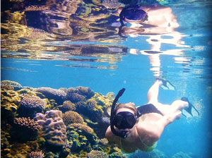 Guest Snorkelling